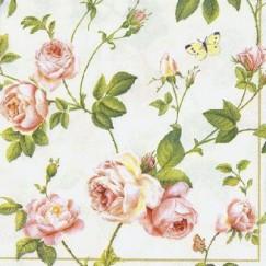 IHR Rambling Rose 2