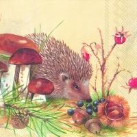 nosy-little-hedgehog